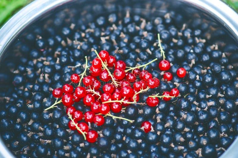 Takken van rode aalbes en zwarte bes in de kom Organische en verse bessen Ruw en vers fruit Concept gezond voedselverstand stock foto's