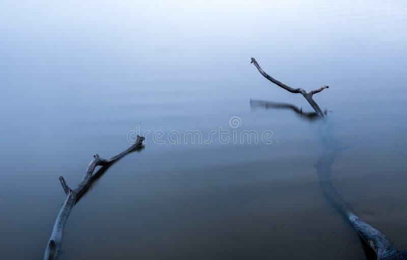 Takken in water stock foto's