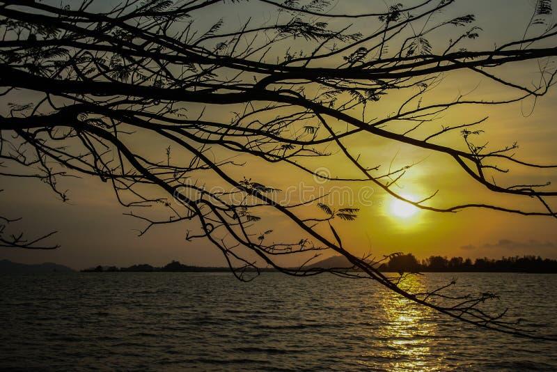 Takken in zonsondergang stock afbeelding