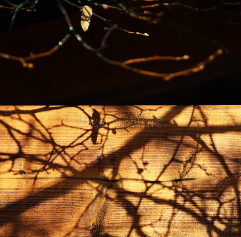 Takkenschaduw op het Hout na Autumn Rain royalty-vrije stock foto's