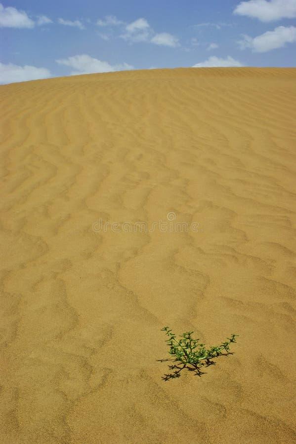 Taklimakan Wüste lizenzfreie stockfotos