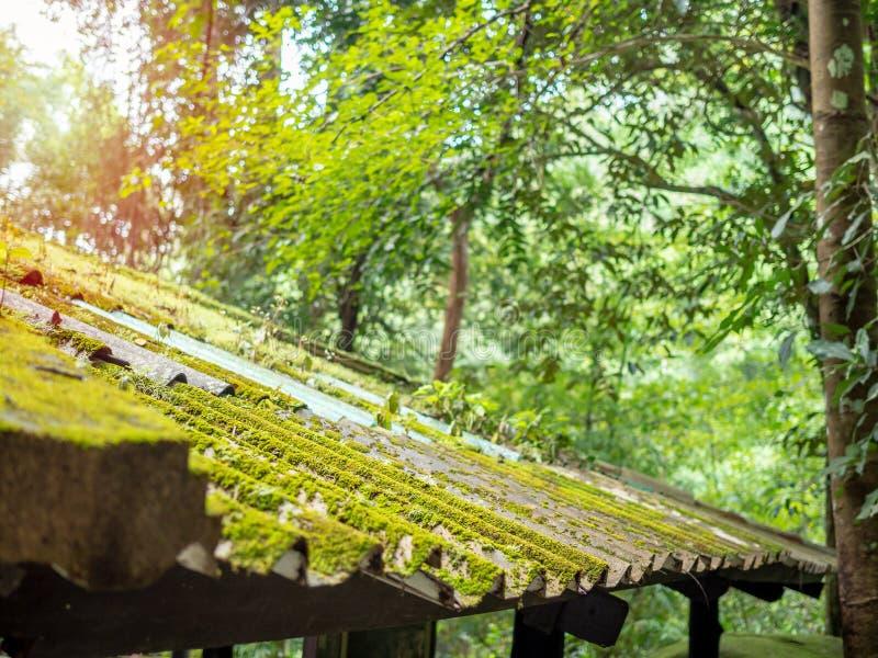 Taktegelplatta som täckas med grön mossa arkivbilder