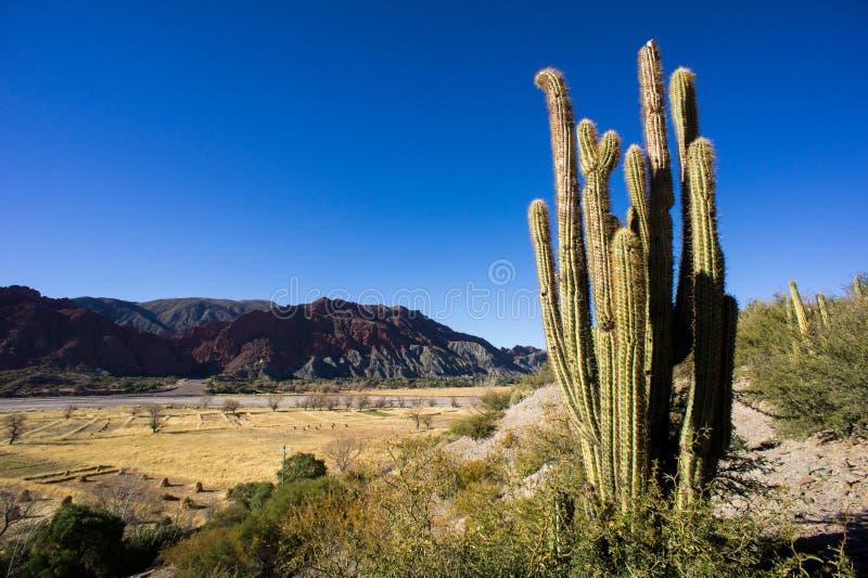 Tal nahe Tupiza, Bolivien stockbilder