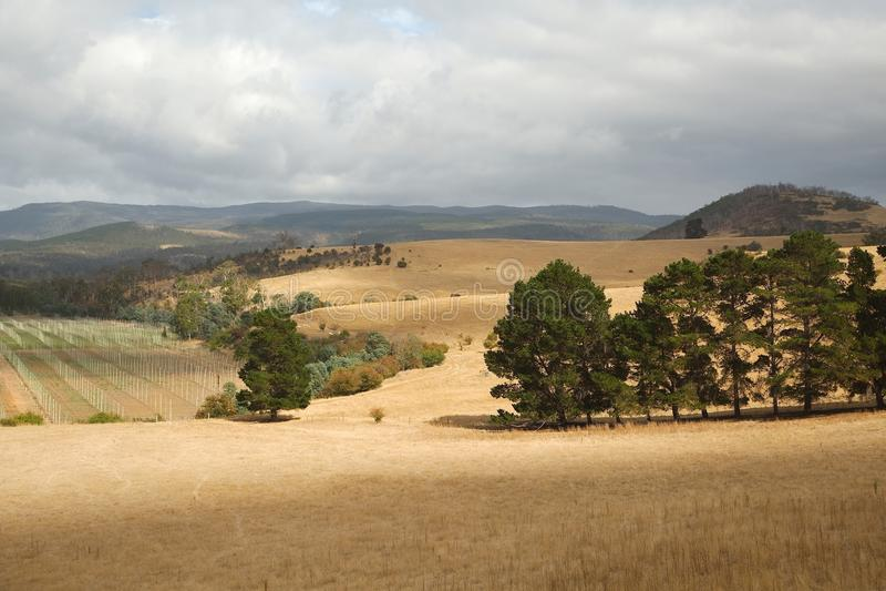 Tal in Tasmanien stockbilder