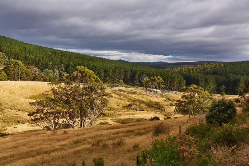 Tal in Tasmanien stockbild