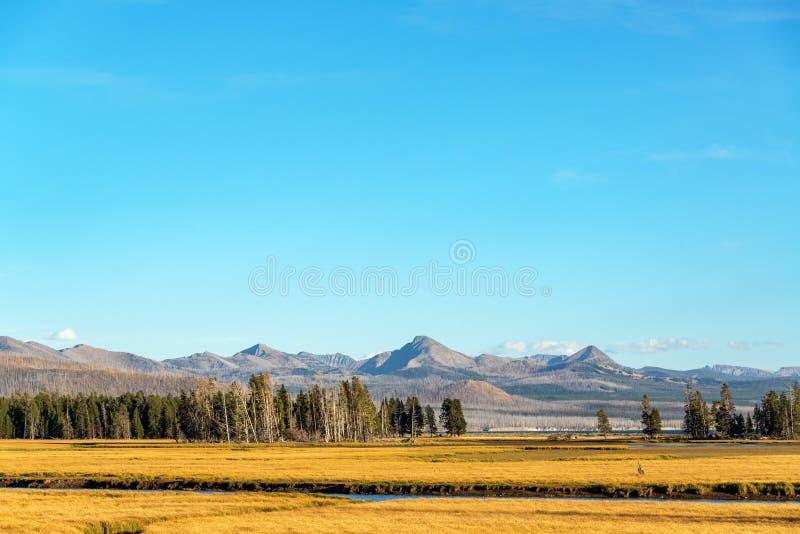Tal und Berge in Yellowstone lizenzfreie stockfotografie