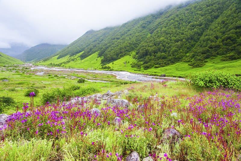 Tal von Blumen, uttarakhand Indien lizenzfreie stockfotos