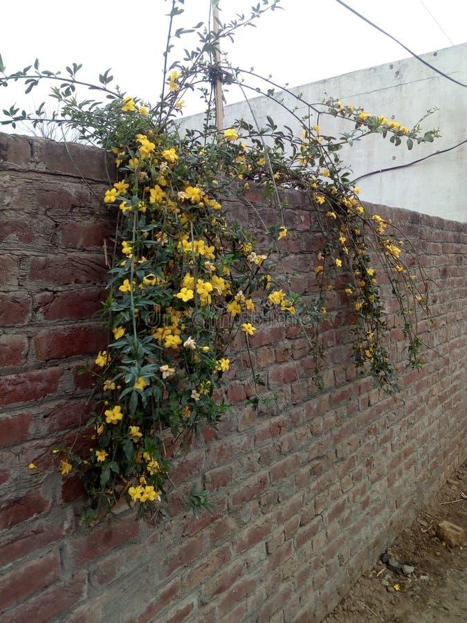Tal von gelben Blumen lizenzfreie stockbilder