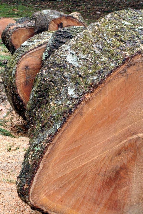 Tala de árboles foto de archivo libre de regalías