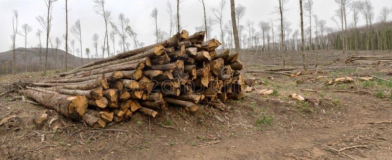 Tala de árboles controlada del bosque imágenes de archivo libres de regalías