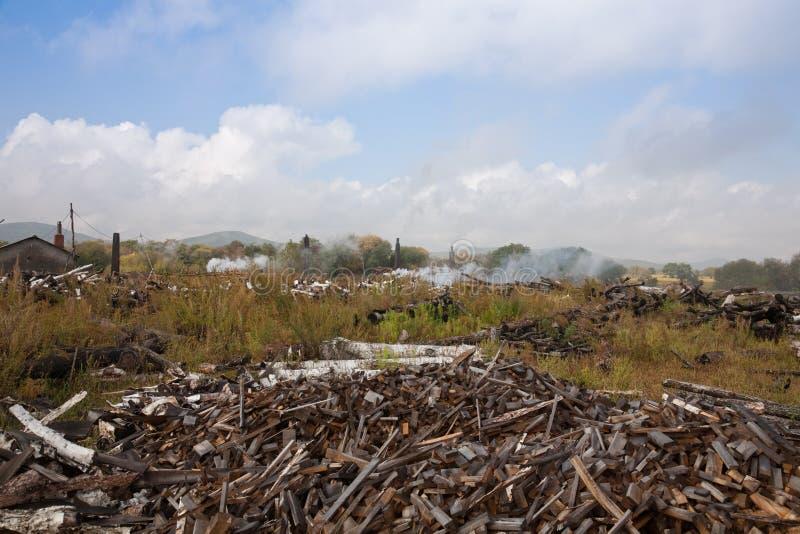 Tala de árboles y contaminación ambiental imagen de archivo