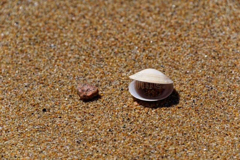 Talande tvåskaligt skaldjur på stranden royaltyfria bilder