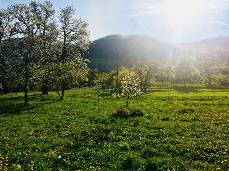 Talas de Eslovaquia del hogar de la primavera de la naturaleza foto de archivo