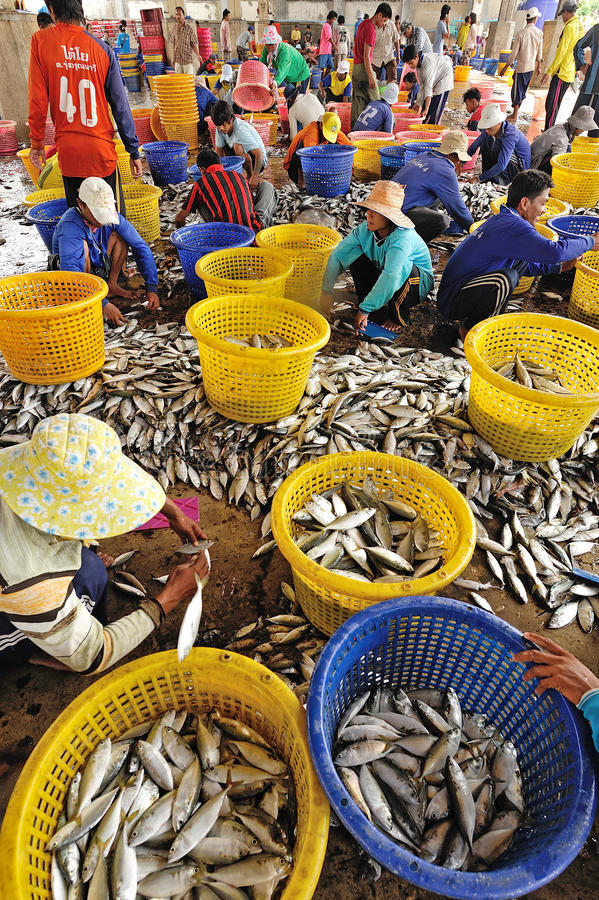 Talaythai owoce morza rynek, Tajlandia fotografia royalty free
