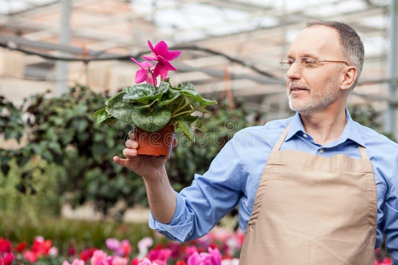 Talentierte ältere Gartenarbeitskraft an der Betriebskindertagesstätte stockfoto