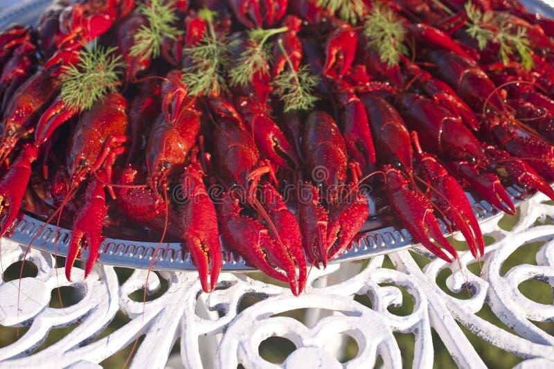 Crawfishes fotografia royalty free