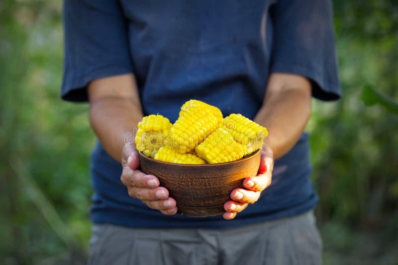Talerz kukurudza w rękach kobieta rolnik obrazy royalty free