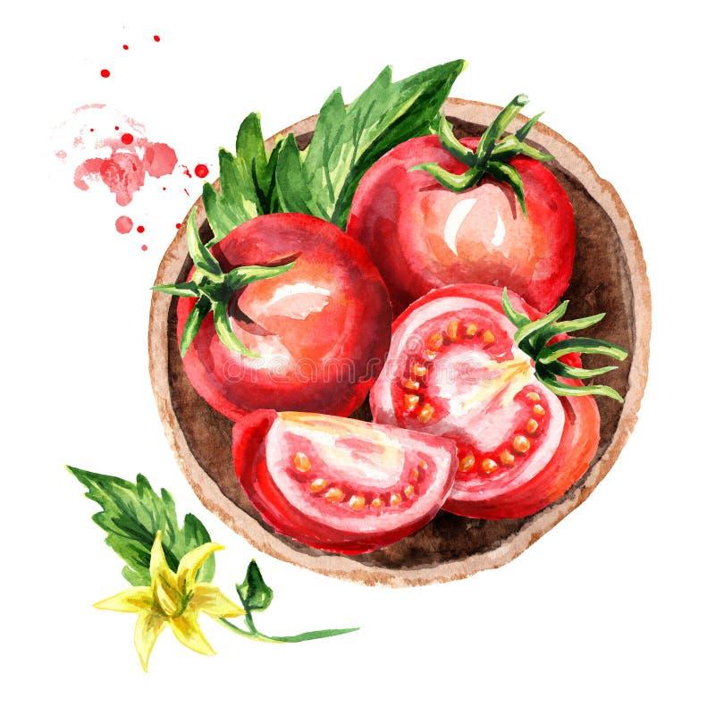 Talerz z dojrzałymi czerwonymi pomidorami, odgórny widok Akwareli ręka rysująca ilustracja, odizolowywająca na białym tle ilustracja wektor