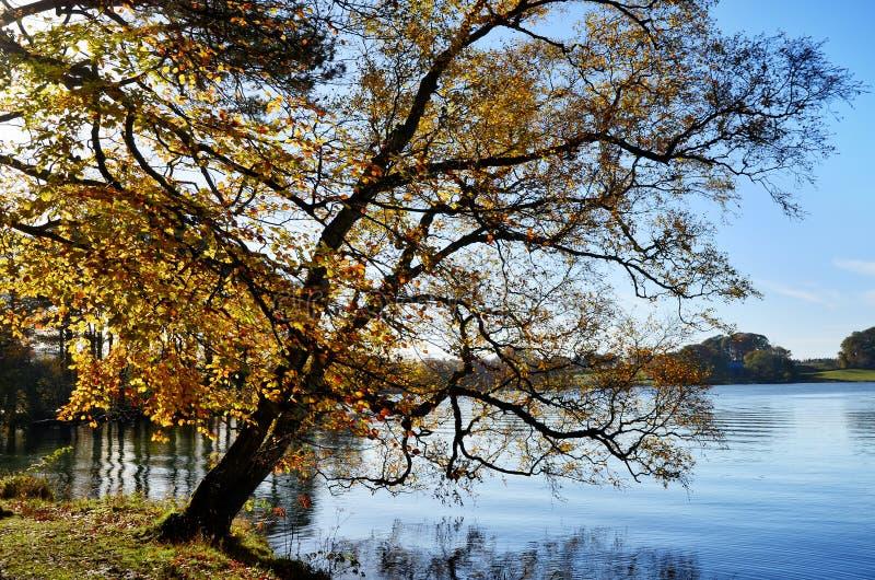 Talkin le Tarn, Brampton, avec l'arbre surplombant photos stock