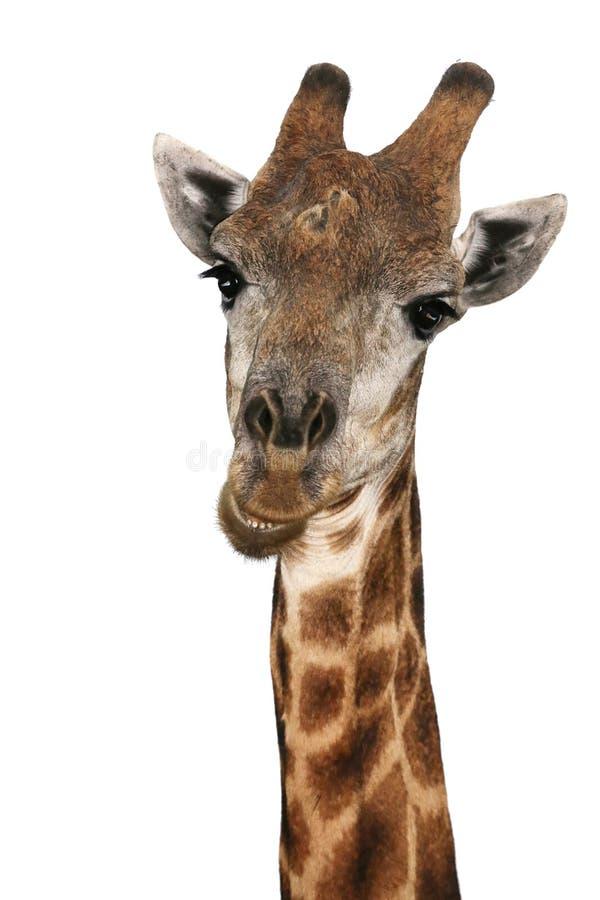 Free Talking Giraffe Stock Photo - 34686790