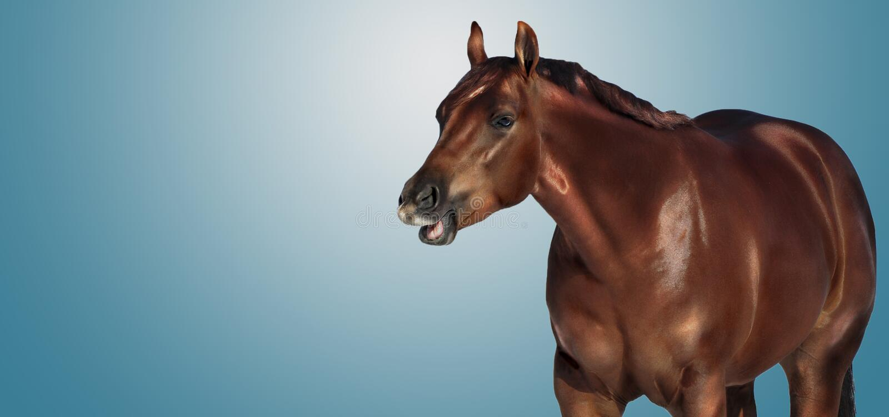 Talking horse bannner stock photos