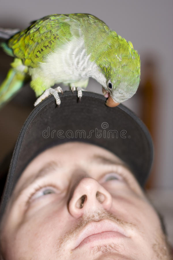 Download Talking To The Animals stock photo. Image of green, perched - 14858964