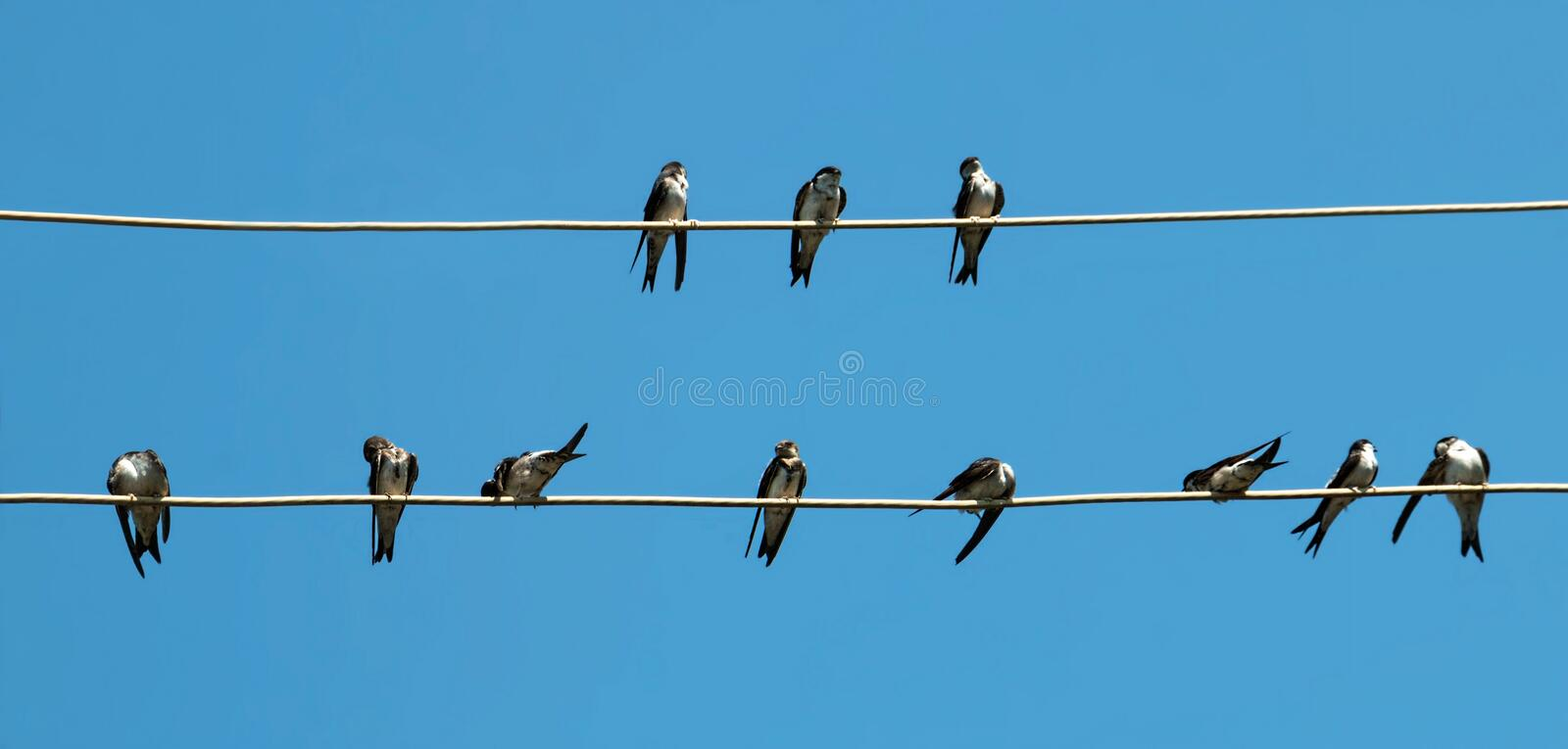 Talks of birds. On the wire royalty free stock photography