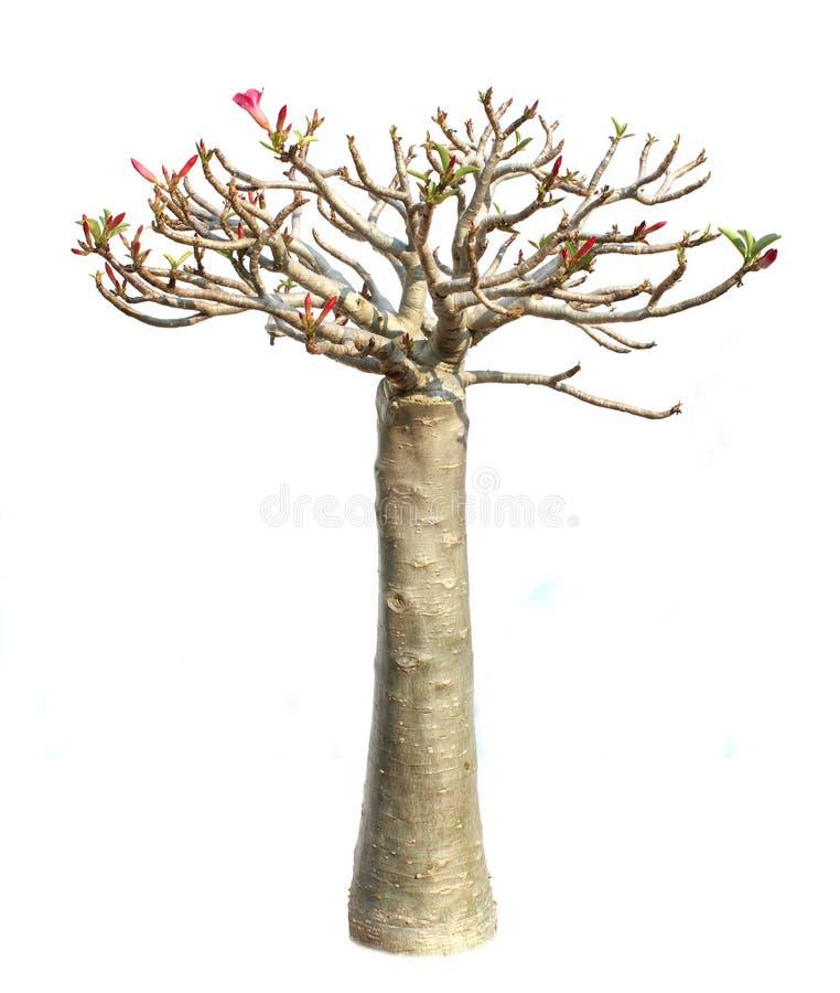 The tall azalea flowers royalty free stock image