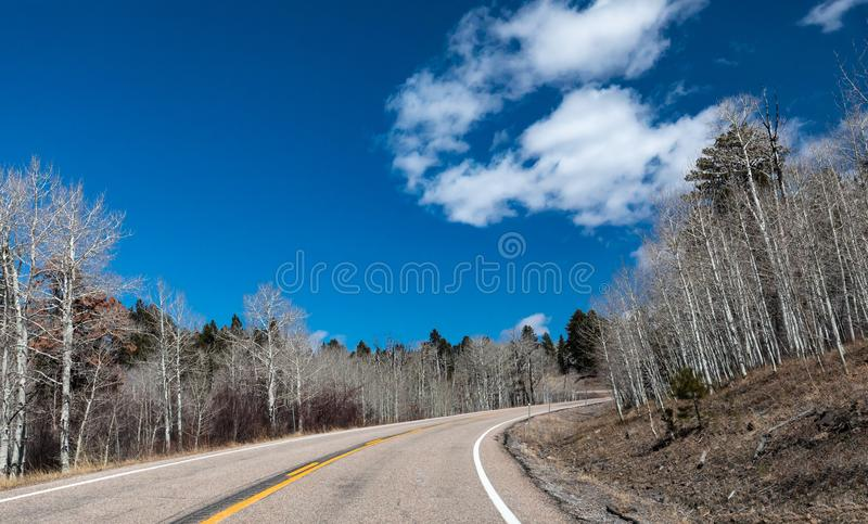 Barren Silver Trees Along a Curvy Road in Southwest Utah royalty free stock photos