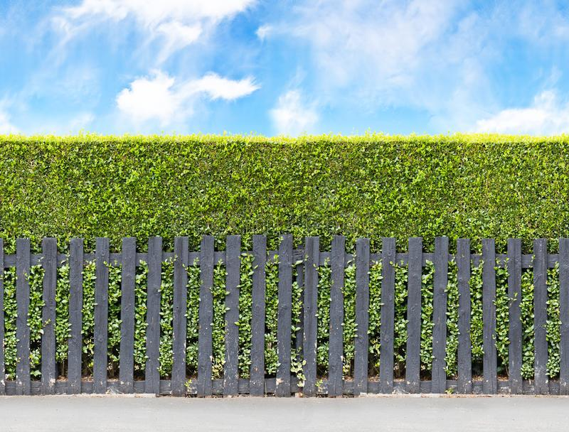 Tall bush hedge with black wooden fence. Seamless endless patte stock images