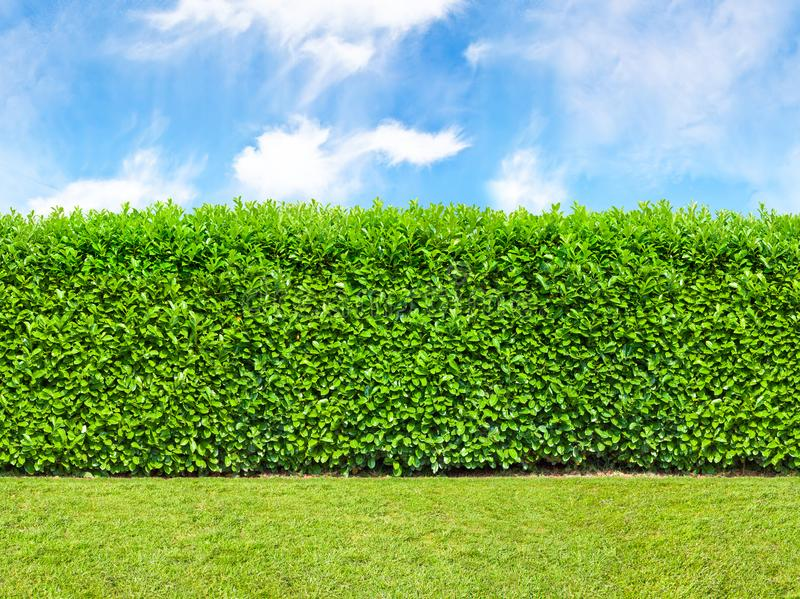 Tall bush hedge with sky and grass. Seamless endless pattern. royalty free stock photos