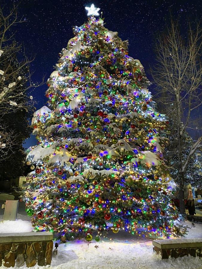 Tall Christmas tree in Big Bear. stock photo