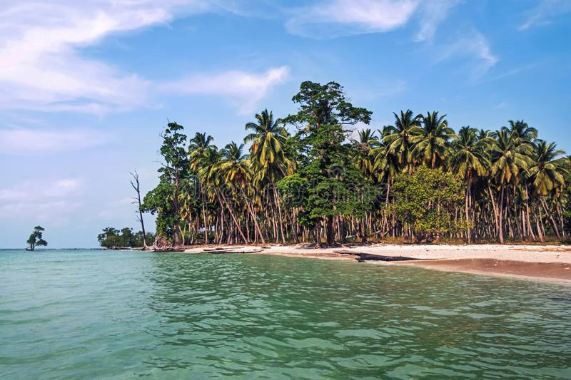 Tall coconut palm trees over tropical island resort beach in Fiji. Palm grove on the shore of a tropical exotic island stock images