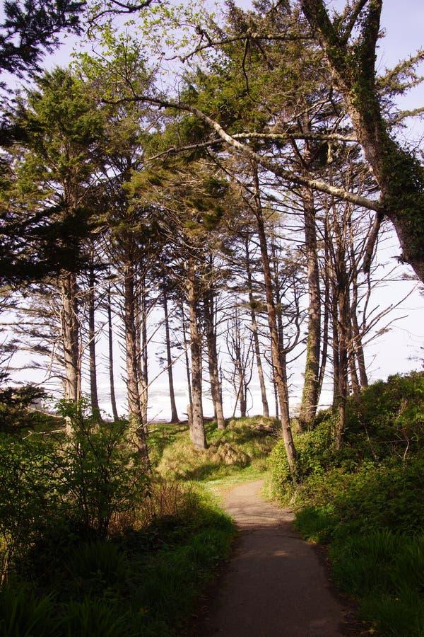 Tall conifers along coastal hills royalty free stock photos
