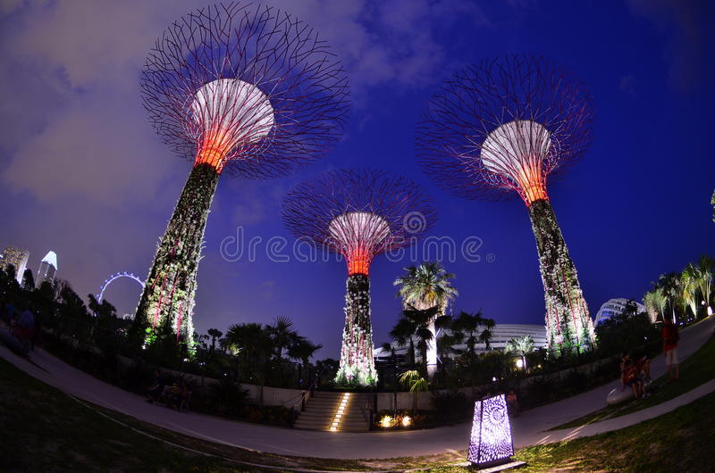 Tall Giant Tree Royalty Free Stock Image