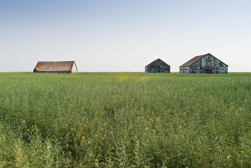 Download Tall grain stock image. Image of canada, saskatchewan - 33270369