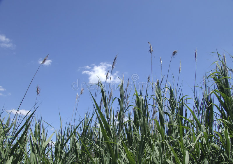 Download Tall Grass stock image. Image of weeds, summer, nature, clouds - 9807