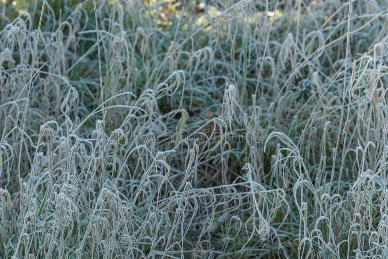 Tall grass in autumn with frost covered with sunshine royalty free stock image