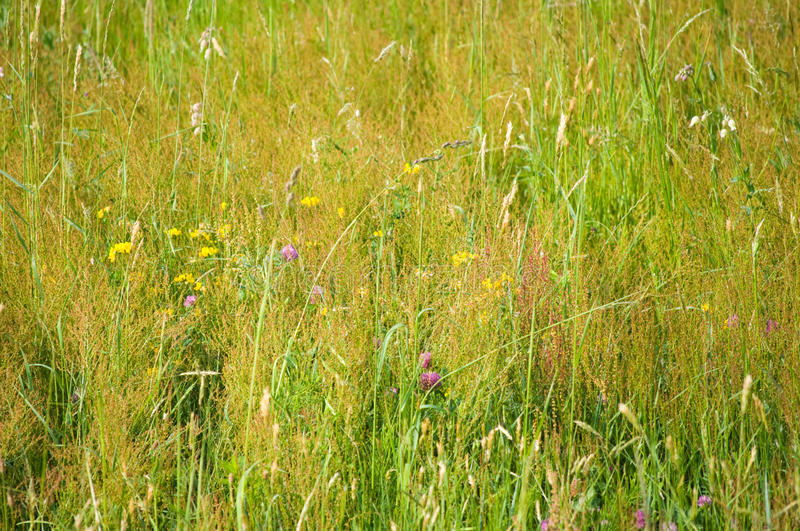 Tall grass background royalty free stock photos