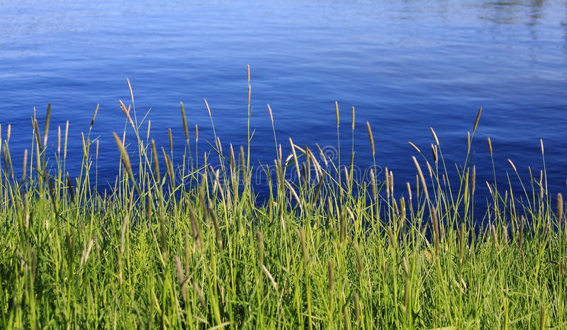 Tall Grass By Blue Lake Royalty Free Stock Photos