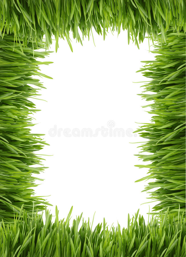 Tall grass border or frame stock photo image of frames for Tall border grass