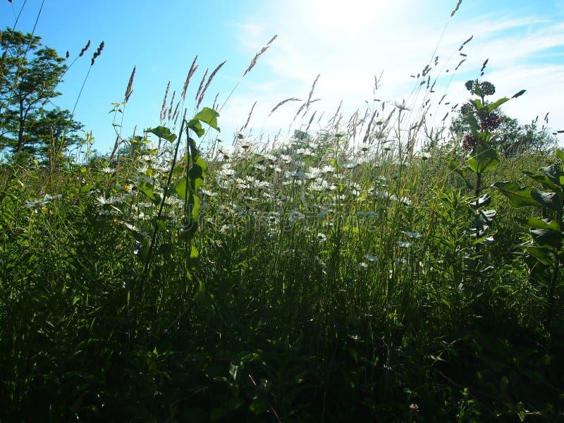 Tall Grass stock photography