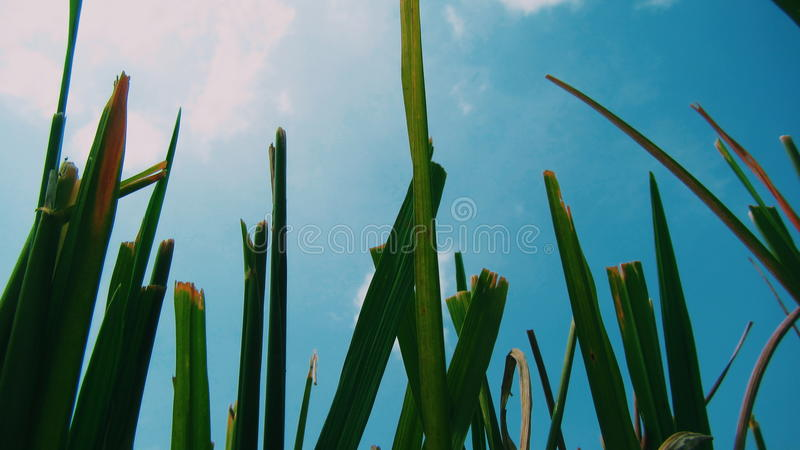 Tall grass stock images