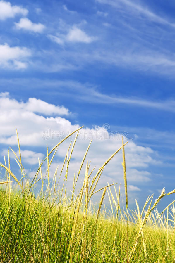 Tall Grass On Sand Dunes Stock Photography