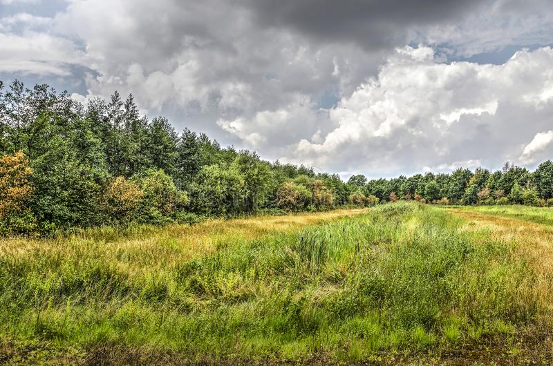 Tall grass, woodland and sky. Meadow with tall grass, trees and bushes in the background, under a dramatic cloudy sky, near Breda, the Netherlands royalty free stock photo