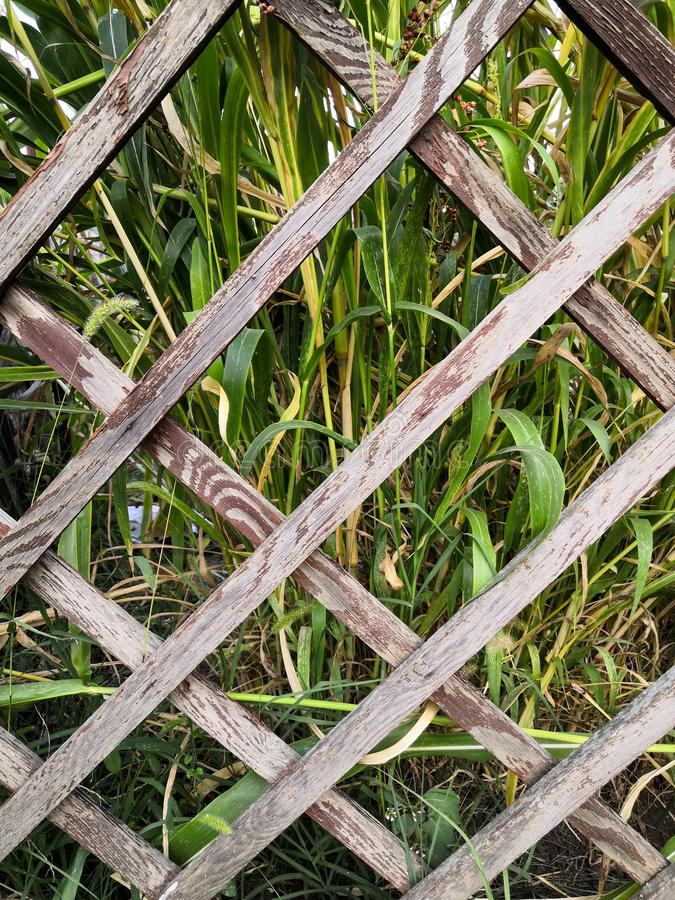 Tall green grass behind a wooden old diamond-shaped fence background stock photos
