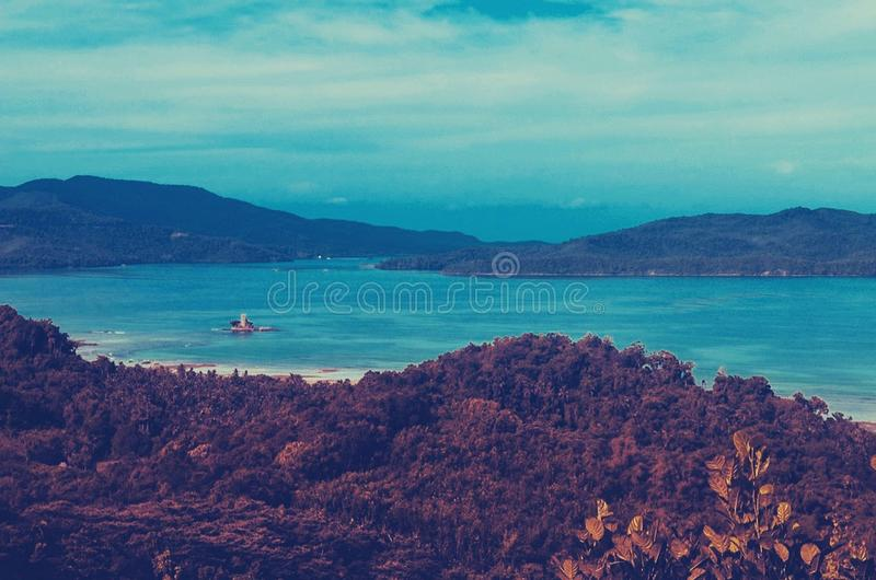 Tall Green Tree Near Body of Water at Daytime royalty free stock image