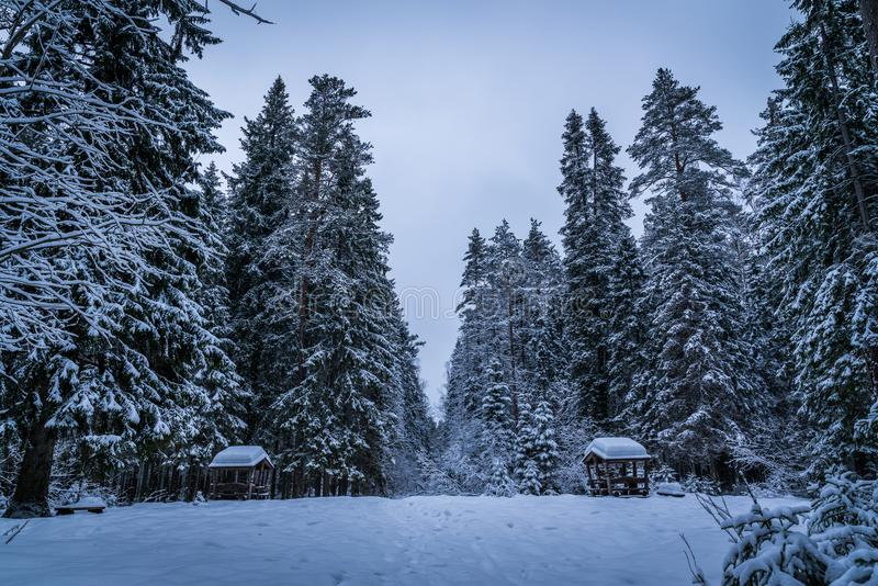 Tall Green Trees Filled With Snows during Winter stock photos