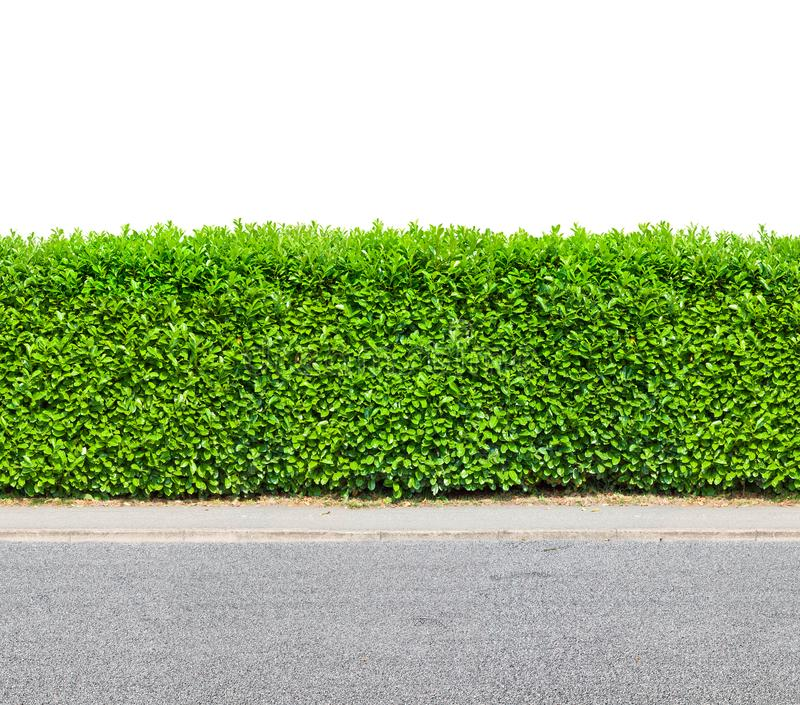 Tall hedge with gravel road isolated on white stock photos