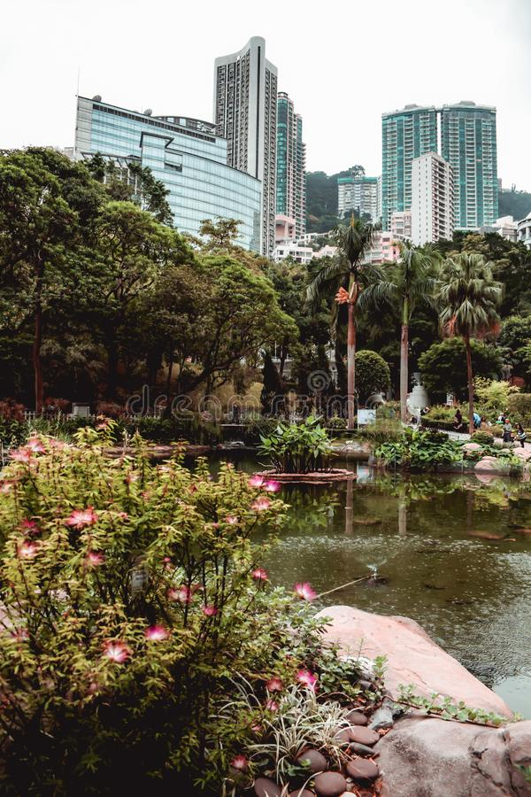 Office buildings hidden behind the greenery of the Hong Kong park stock photos